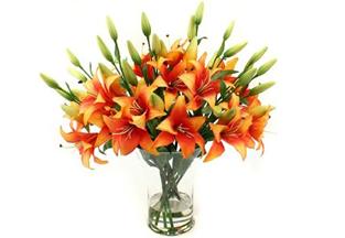 Silky Florals
